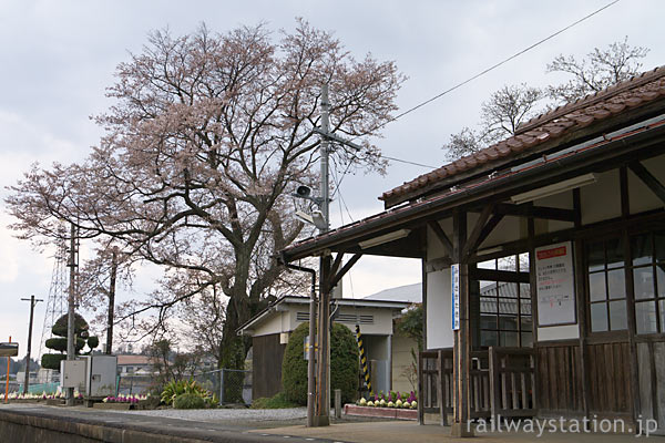 因美線・美作滝尾駅、木造駅舎と満開前の桜