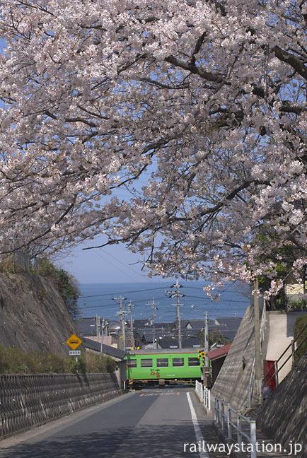 JR山陰本線・名和駅近くをゆく列車、満開の桜と日本海