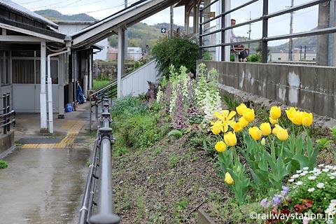 JR姫新線・太市駅、駅構内の黄色いチューリップ