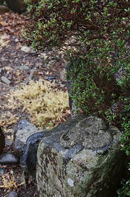 JR西日本・三江線・尾関山駅、枯池横のコンクリートが付着した岩