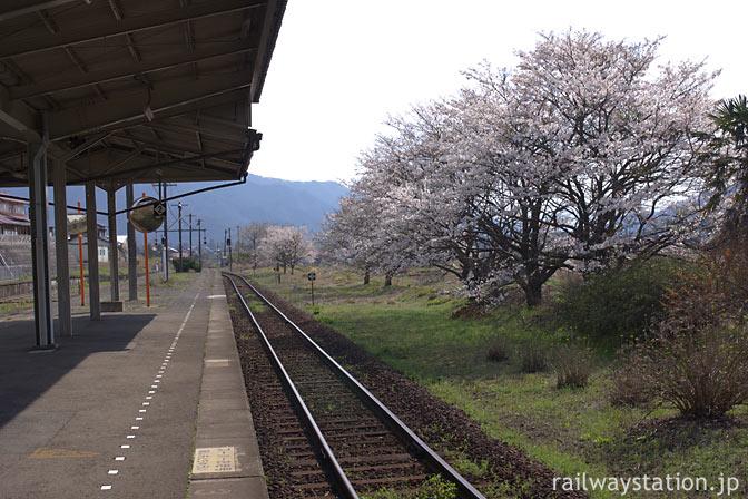 JR西日本・山口線・徳佐駅、ホーム横の満開の桜