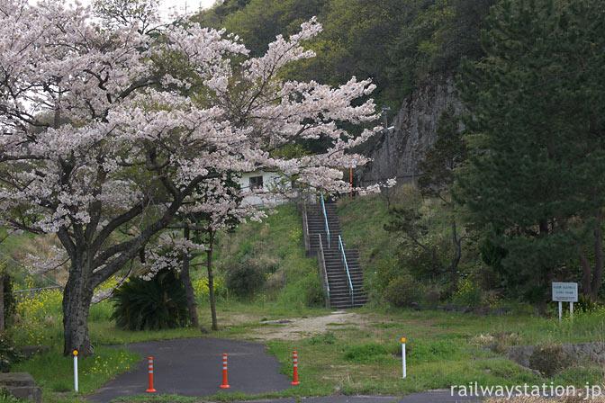 JR西日本・山陰本線・湯里駅、旧駅舎跡地に咲く満開の桜