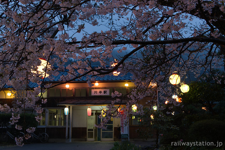 三江線、夜の帳が下りる川平駅、満開の桜と提灯