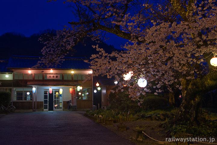 三江線川平駅、夜桜と木造駅舎を独占