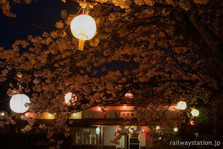三江線、桜満開の川平駅、提灯が吊るされ夜祭のよう…