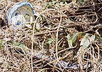 新垂井駅で使われていた??ホーム跡に埋もれた染付けの和式便器