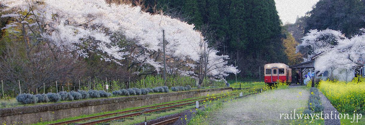 小湊鉄道の駅を巡る旅、イメージ(春、桜咲く月崎駅)