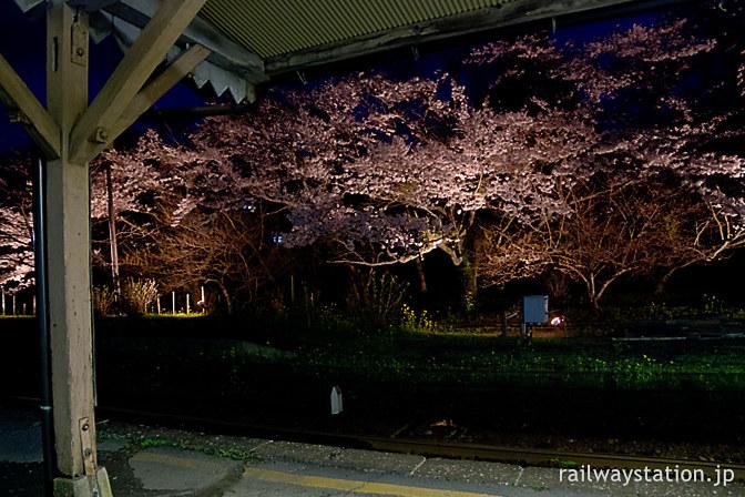 春の小湊鉄道・月崎駅、ライトアップされた夜桜