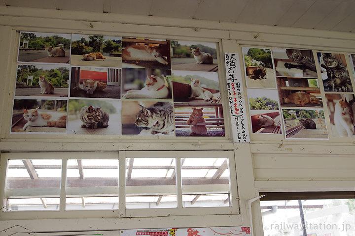 小湊鐡道・養老渓谷駅待合室、駅猫の写真