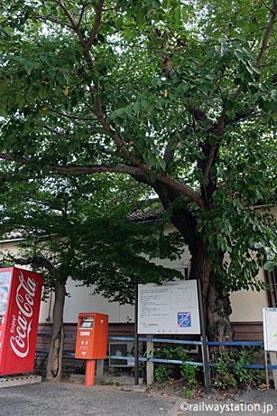 名鉄三河線・高浜港駅、駅舎に寄り添う桜の木
