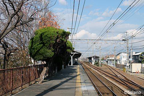 南海電鉄・浜寺公園駅3番ホーム端、柿など木が植えられている