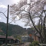 大井川鉄道、桜咲く青部駅。レトロな旧南海電鉄の車両と木造駅舎