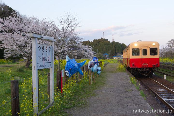 小湊鉄道、夕方、桜咲く月崎駅に入線するキハ200形気動車