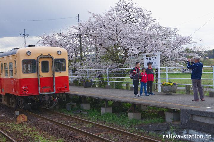小湊鉄道・馬立駅、列車と桜をバックに記念撮影する人々