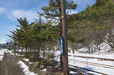 わたらせ渓谷鉄道、松並木が印象的な足尾駅ホーム