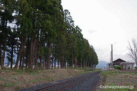 山形鉄道・フラワー長井線・羽前成田駅、鉄道林